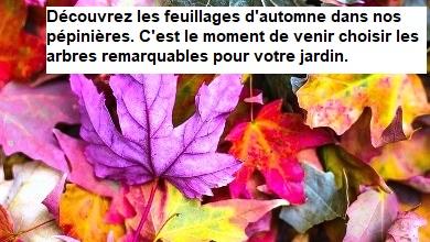 Découvrez les feuillages d'automne.